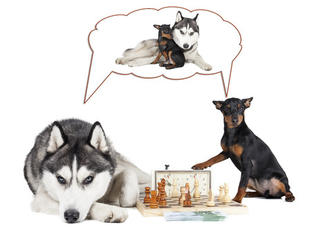 Dogs (Siberian Husky and Miniature Pinscher) playing chess photo