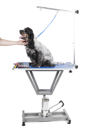 canines: Dog grooming table on a white background Stock Photo