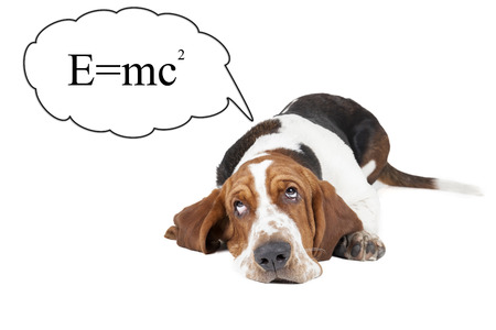 Basset hound thinks about the theory of relativity on a white background in the Studio. photo