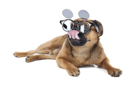 Dog with glasses in the studio on a white background photo