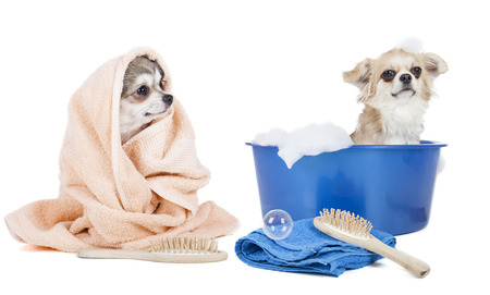 Wash the dogs on a white background in studio photo