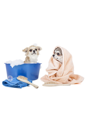 Wash the dogs  grooming dog  on a white background in studio photo