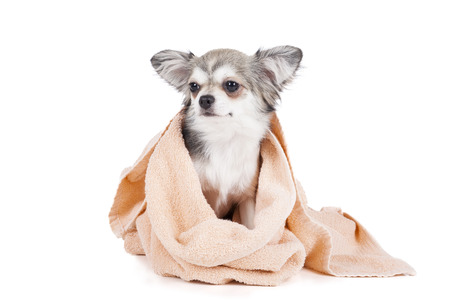 Wash the dog on a white background in studio Stock Photo