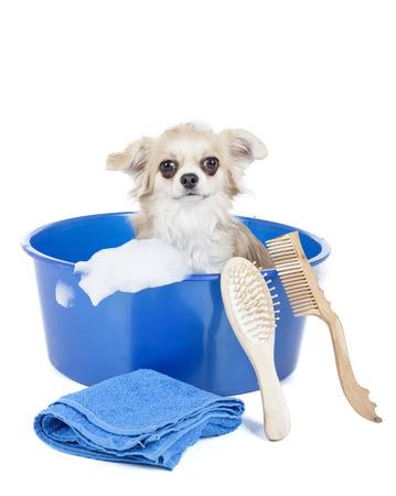 lavar: Lavar el perro en un fondo blanco en el estudio