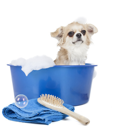 Wash the dog on a white background in studio photo
