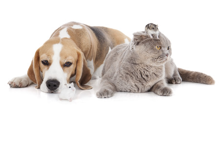 riskiness: dog, cat and hamster on a white background isolated in studio
