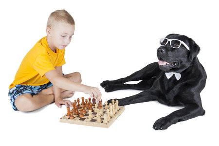 child and labrodor retriever playing chess on a white background in studio photo