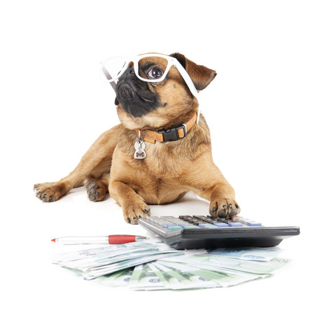 bordeaux dog: Dog Breed Small Brabant Accountant