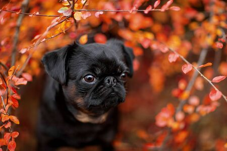 cute portrait of a dog in autumn foliage