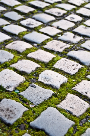 Cobblestone road covered with moss with shallow depth of field photo