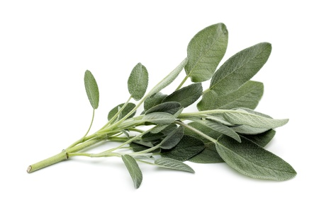 aromatic: sprig of sage on white background