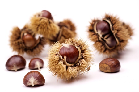 tree nuts: close up of chestnuts isolated on white background Stock Photo