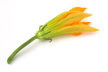 close up of a courgette flower on white background photo