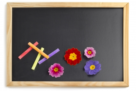 blackboard with colorful chalks and primrose blossoms photo