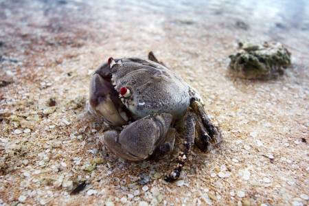 close up of a sand crab in the seashore photo