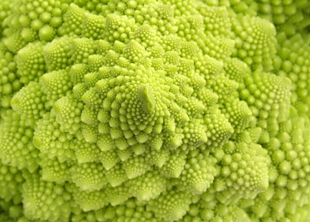 detail of texture of a romanesco broccoli  photo