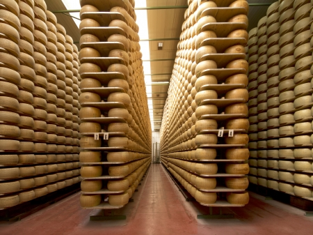 hard cheese: wheels of parmesan on the racks of a storehouse Stock Photo
