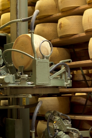 maturing: robot in a maturing storehouse of parmesan cheese
