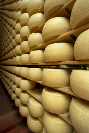maturing: freshly made wheels of cheese in a maturing cellar Stock Photo