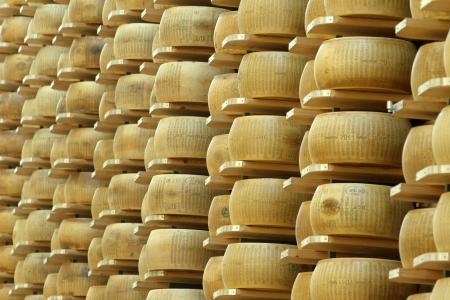agriculture industry: lots of wheels of parmesan cheese on shelves of a storehouse Stock Photo