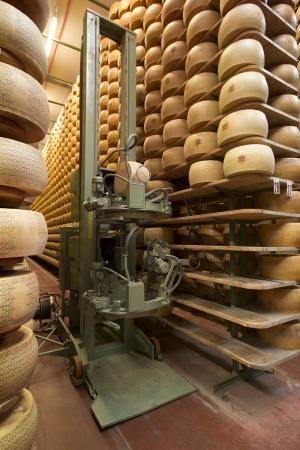 alimentary: robot in a maturing storehouse of parmesan cheese