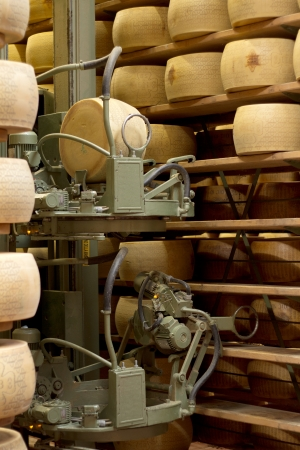 robot in a maturing storehouse of parmesan cheese photo