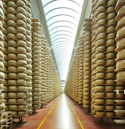 rack wheel: view of a maturing storehouse of parmesan cheese Stock Photo