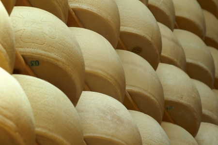 alimentary: freshly made parmesan cheese on shelves of a storehouse Stock Photo
