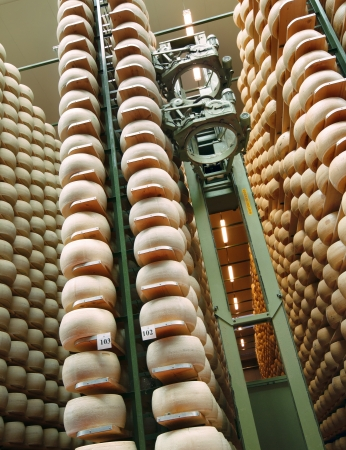 aisles: robot in the aisles of a dairy factory