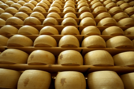 factory farm: vertical view of a heap of freshly made wheels of cheese Stock Photo