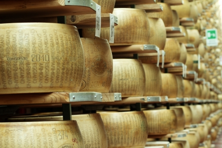 maturing: wheels of cheese on the racks of a maturing storehouse