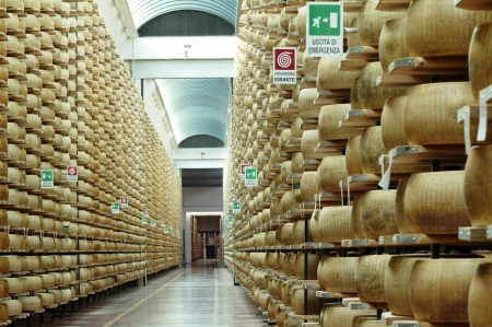factory farm: wheels of parmesan cheese in a stock seasoning
