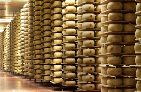 maturing: shelves of a cheese maturing warehouse  Stock Photo