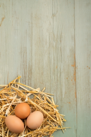 freshly: freshly laid eggs in nest of hay on wooden background