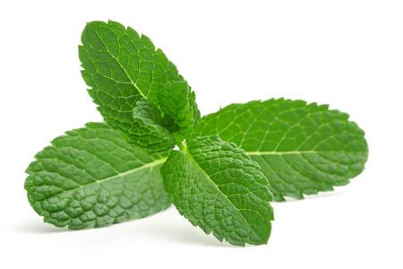 分離された緑のミントの葉のクローズ アップ 写真素材