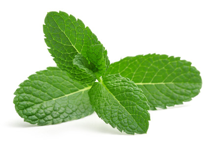 close up of green mint leaves isolated Stock Photo
