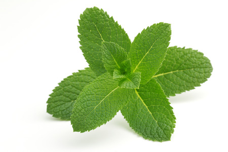 balm: close up of green mint leaves isolated on white background
