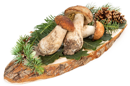 fall harvest: three ceps and green leaves on cutting board