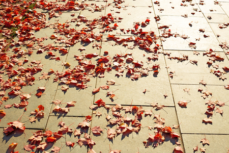 red maple leaves fallen on city pavement