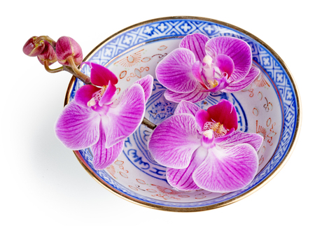 japanese cookery: purple orchid in a chinese bowl isolated on white Stock Photo