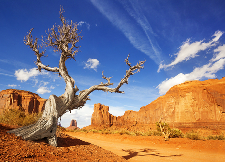 dry tree at the side of a dirt road in monument valley