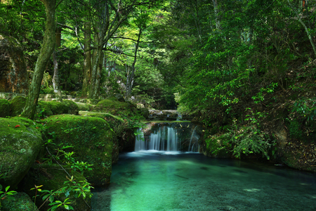 River cascade in a green forest with mossy rocks
