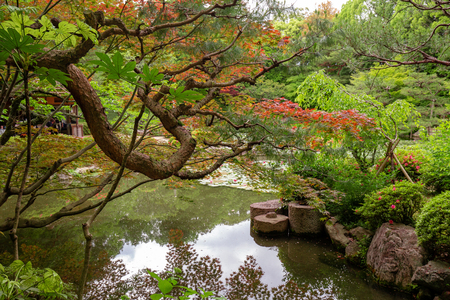 Foliage and pond in japanese garden Фото со стока