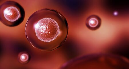 Embryonic stem cells in a red