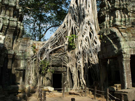 Siem Reap, Cambodia, April 6, 2016: Trees have grown over some of the rooms of the Ta Prohm temple in the Khmer temple complex of Angkor 新聞圖片