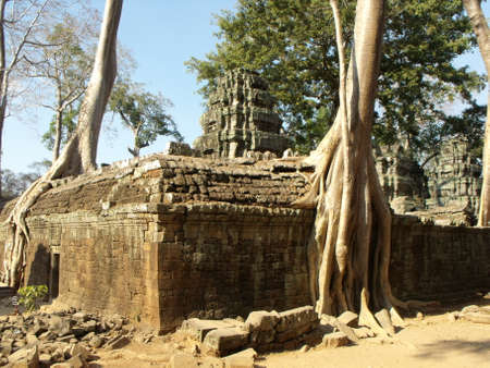 Siem Reap, Cambodia, April 6, 2016: Trees devour some of the stone walls of the Ta Prohm temple in the Khmer temple complex of Angkor