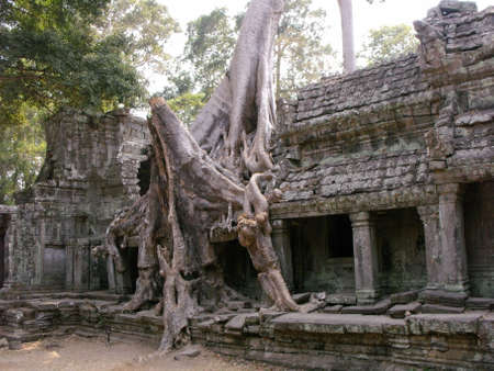 Siem Reap, Cambodia, April 8, 2016: A large tree grows over one of the halls in one of the temples in the Khmer temple complex of Angkor 新聞圖片