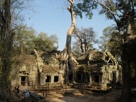 Siem Reap, Cambodia, April 6, 2016: A large tree above one of the rooms of the Ta Prohm temple in the Khmer temple complex of Angkor