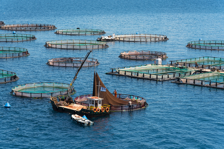 Fish farming on the sea. Corfu Island. Greece. 스톡 콘텐츠