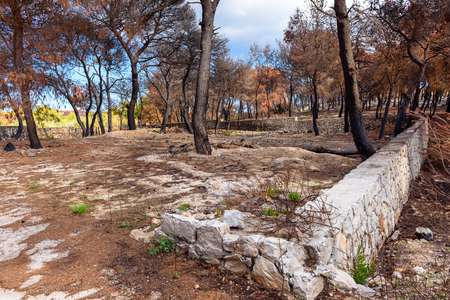 Burned trees in Greek countryside. Zakynthos island. Stock Photo - 96848244